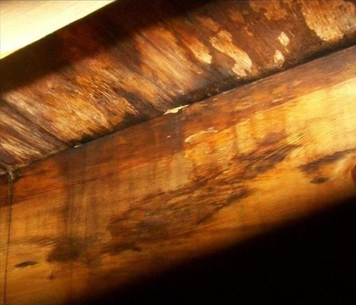 Mold Damage In Sacramento Basement  After