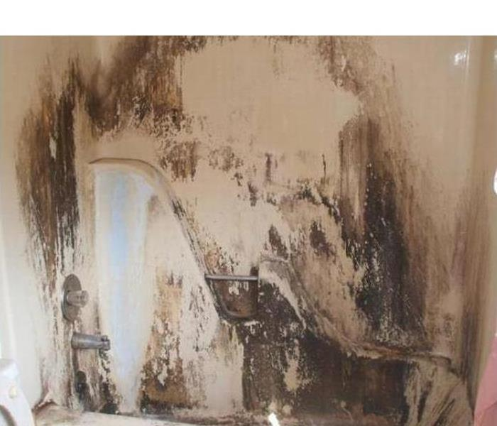 West Sacramento Bathroom Mold Remediation